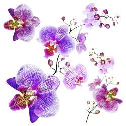 Samolepicí dekorace Orchids, 30 x 30 cm
