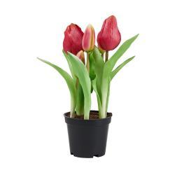 """FLORISTA Tulipány """"Real Touch"""" v květináči - růžová"""