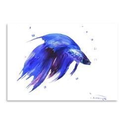 Plakát Betta Fish
