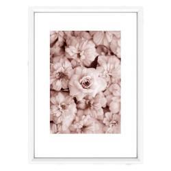 Obraz Piacenza Art Roses In Rosé, 30 x 20 cm