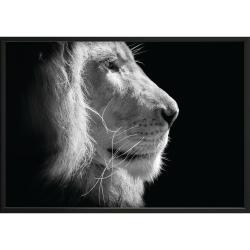 Černo-bílý plakát DecoKing Lion King, 100 x 70 cm