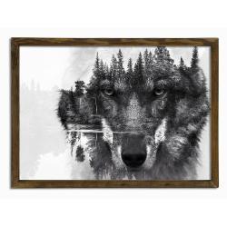 Nástěnný obraz Husky, 70 x 50 cm