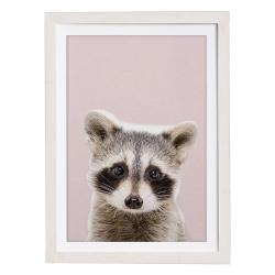 Nástěnný obraz v rámu Querido Bestiario Baby Racoon, 30 x 40 cm