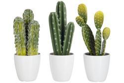 J-Line by Jolipa Sada 3 kaktusů v květináčích - Ø 11*26cm