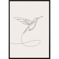 Nástěnný plakát v rámu SKETCHLINE/HUMMINGBIRD, 50x70cm