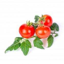 Lingot pro chytré květináče Véritable Cherry rajčata
