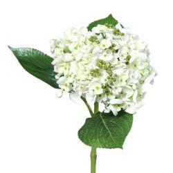 Umělá hortenzie bílá, 44 cm