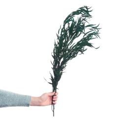 FLOWER MARKET Eukalyptus sušený