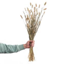 FLOWER MARKET Sušené kytice tráva Lagurus 70 cm set 2 ks