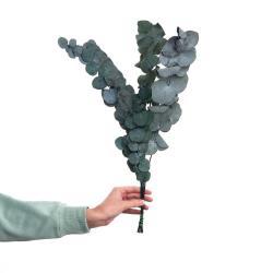 FLOWER MARKET Sušený eukalyptus 60 cm set 2 ks