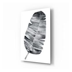Skleněný obraz Insigne Feather,70x110cm