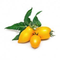 Lingot se semeny žlutých mini rajčat pro chytré květináče Véritable