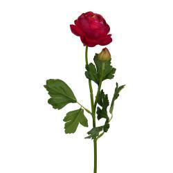 FLORISTA Pryskyřník - růžový