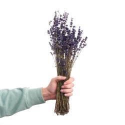 FLOWER MARKET Levandule sušená 35 cm