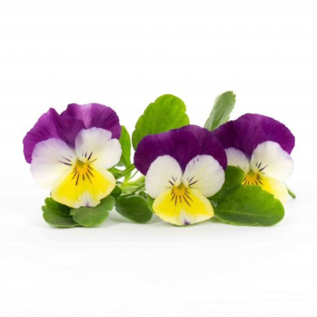 Produktové foto Lingot pro chytré květináče Véritable Maceška BIO