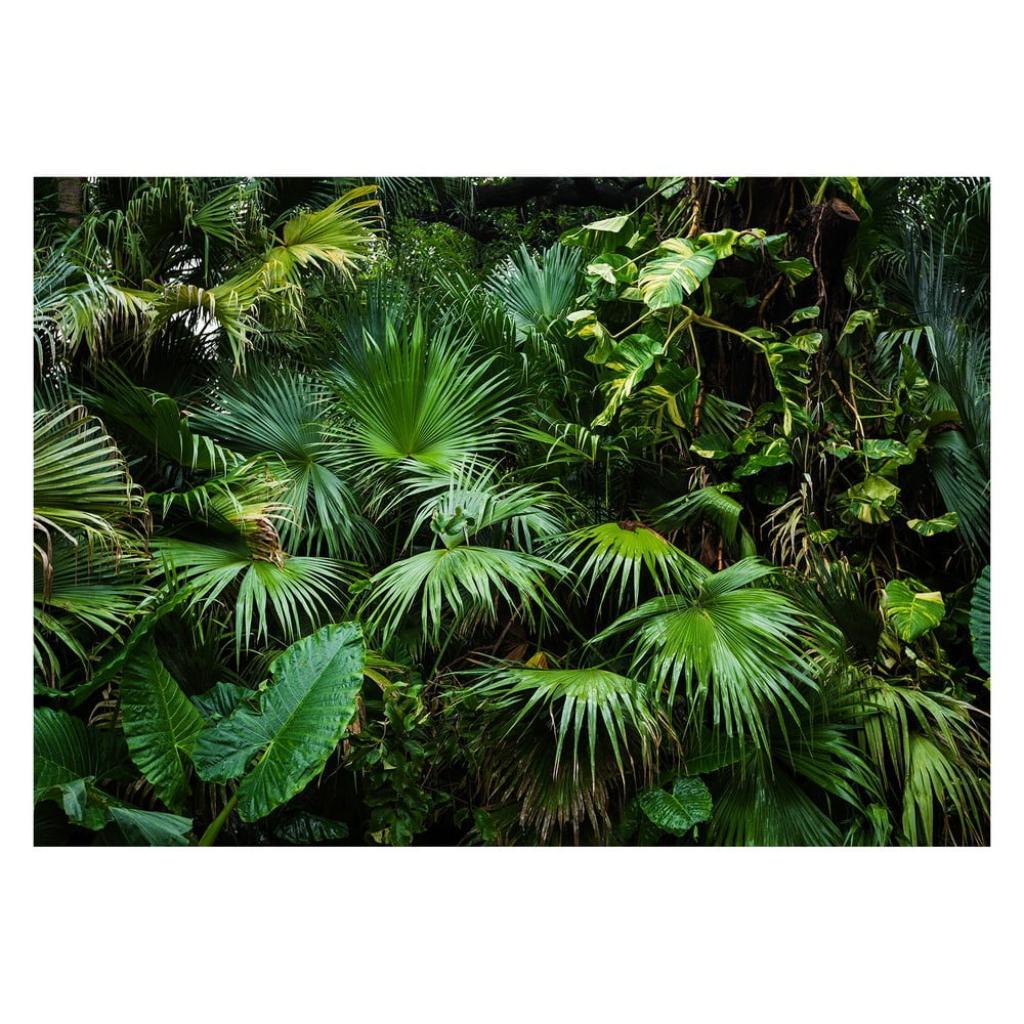Produktové foto Velkoformátová tapeta Artgeist Sunny Jungle, 400x280cm