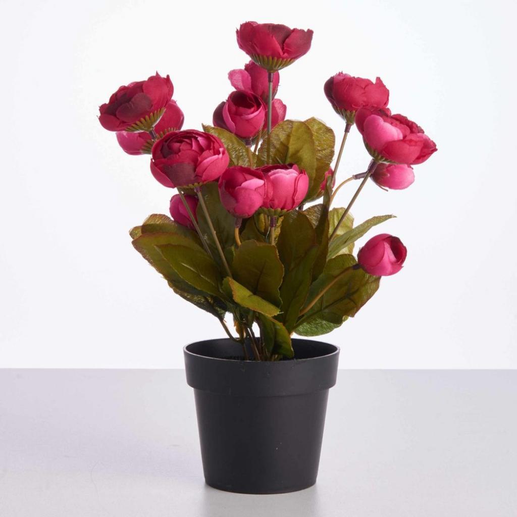 Produktové foto FLORISTA Pivoňky v květináči - bordó