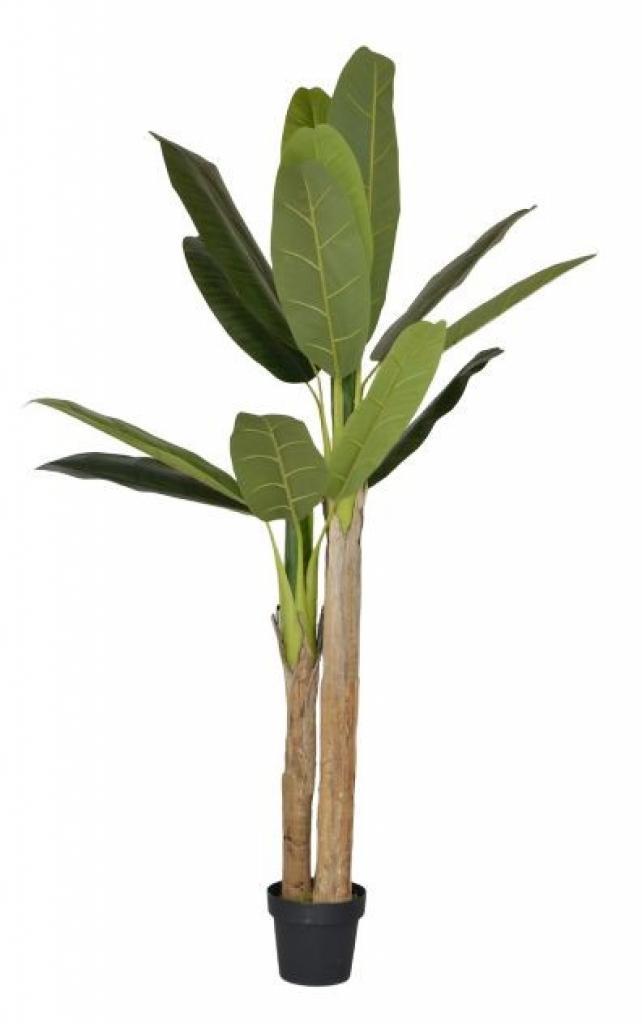 Produktové foto Colmore by Diga Dekorace pokojové rostliny Banánovník - 180 cm