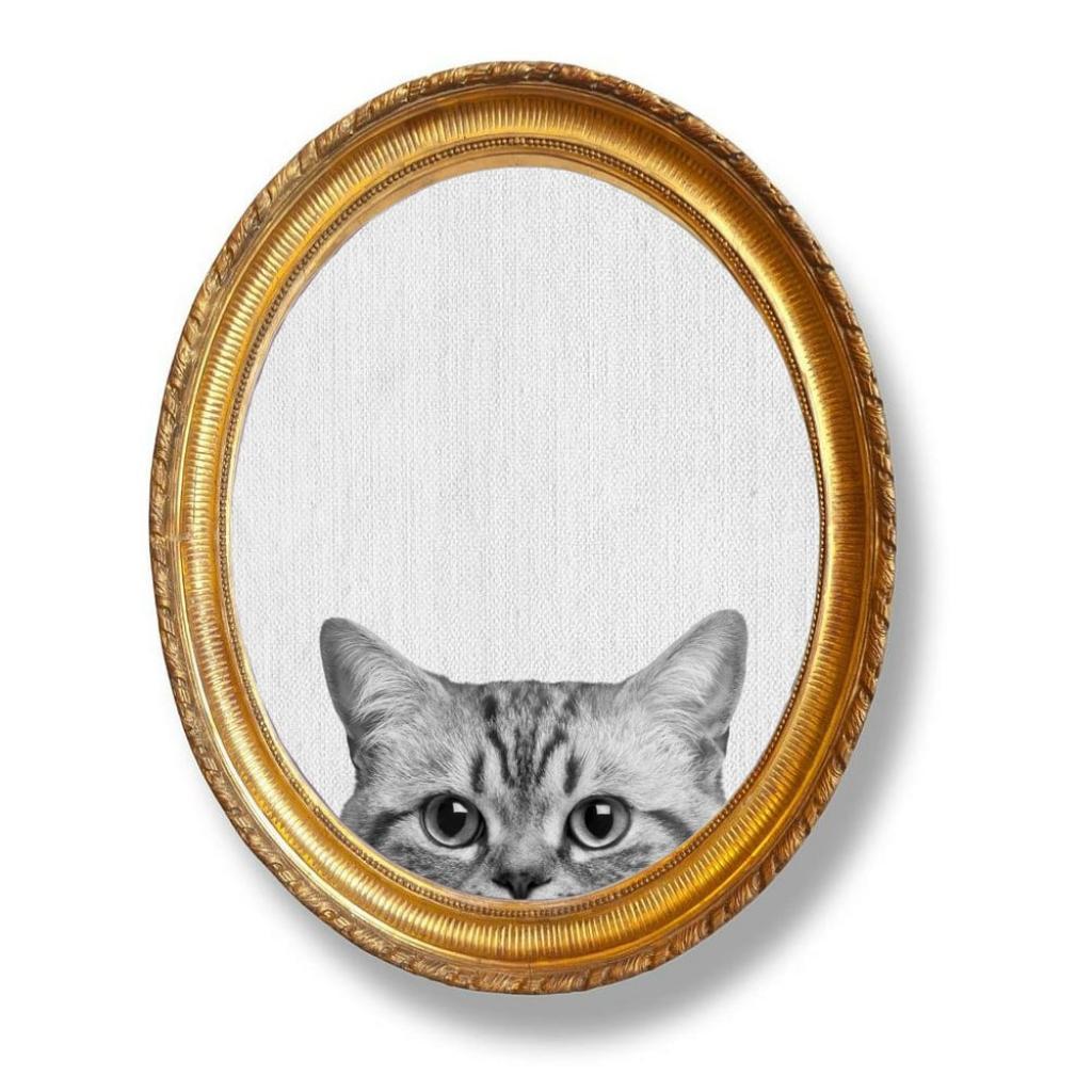 Produktové foto Oválný nástěnný obraz Really Nice Things Cat, 40 x 50 cm