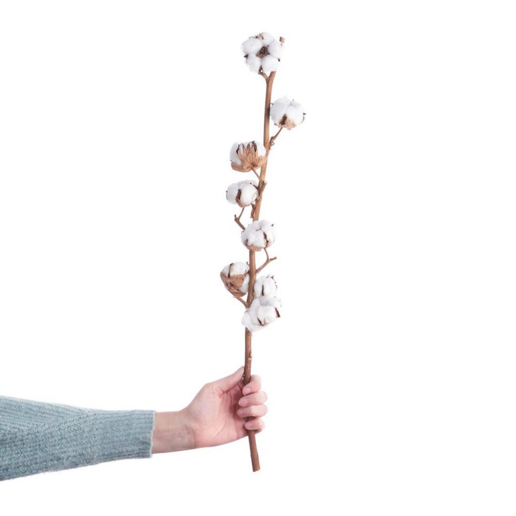 Produktové foto FLOWER MARKET Sušené větvičky bavlníku 60 cm set 2 ks