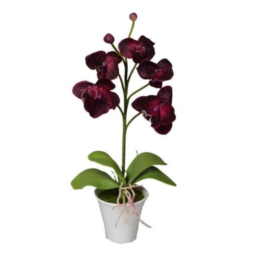 Produktové foto Umělá Orchidej v květináči tmavě červená, 35 cm