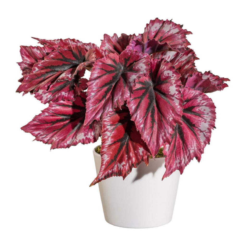 Produktové foto Umělá Begonie v květináči červená, 25 cm